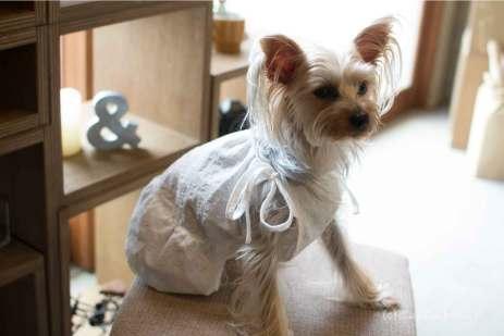 犬 服 洋服