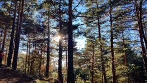 bosque-7-picos