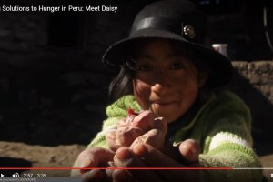 Lasting Solutions to Hunger in Peru Meet Daisy