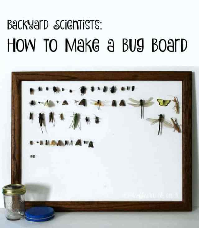 DIY Bug Board