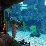 Loveland Living Planet Aquarium in Salt Lake City