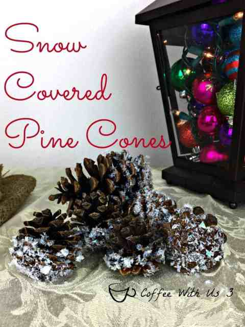Snow Covered Pine Cones