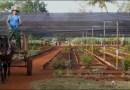Sujeten Riendas y Tractores:  El por qué se Deberían Desarrollar Tratados Entre Cuba y Estados Unidos con Cautela