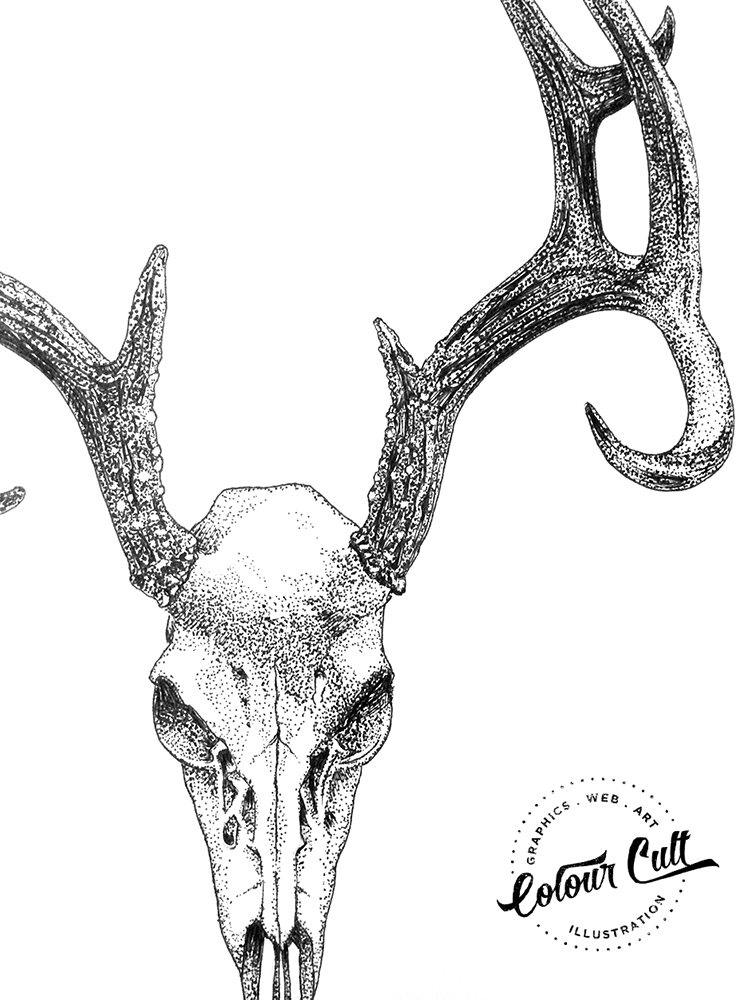 Colour Cult Skull- A to Z of the unusual illustrated by Tegan Swyny. Prints coming soon to colourcult.com.au
