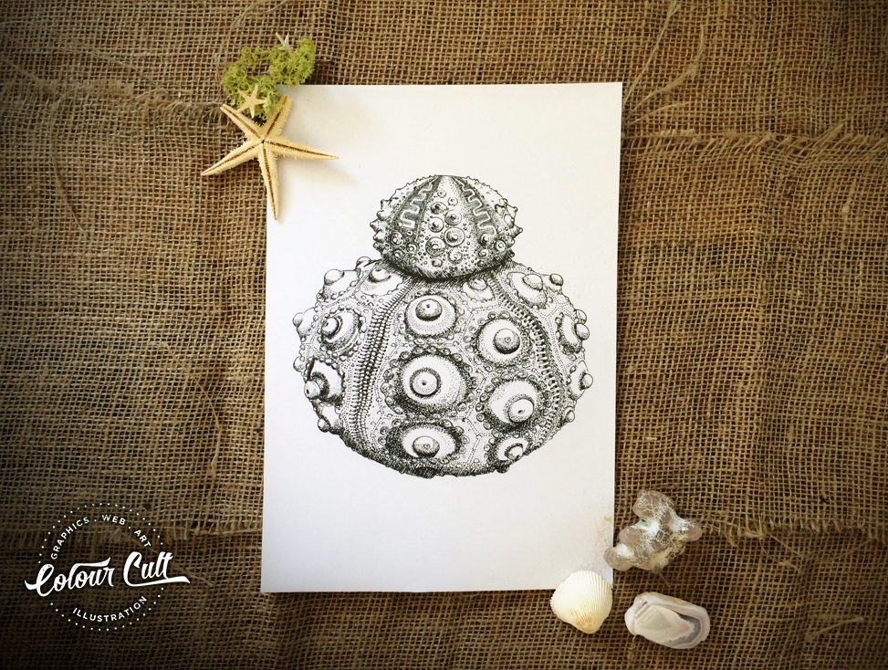 Colour Cult Urchin- A to Z of the unusual illustrated by Tegan Swyny. Prints coming soon to colourcult.com.au