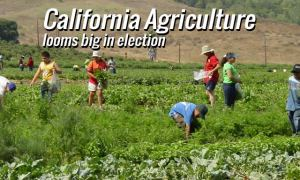 Presidential Race and California Agriculture