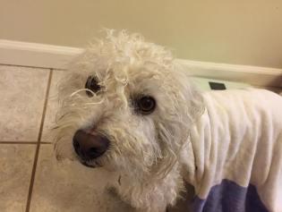 Jake's Wish foster dog Duffy