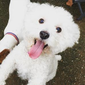 Jake's Wish foster dog Luna
