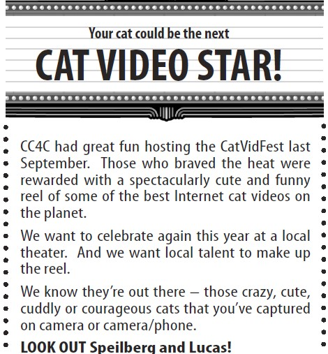 cat video star _ 2