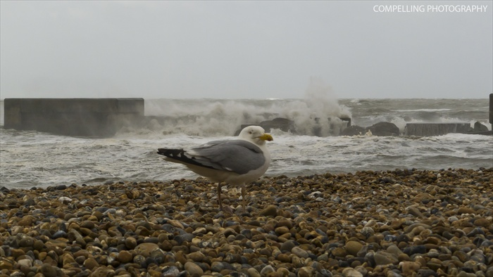 Gulls, Beach and the Waves Waves Seascape Seagull Photography Hastings Harbour Arm East Sussex Birds Beach