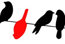 birds, UEA