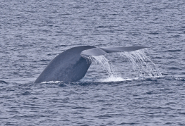 Whale Watching California, Santa Barbara Fall Islands Cruise