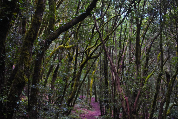 La Gomera: The Forgotten Canary Island