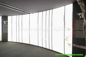 Galleria Introduttiva, il Cretaceo