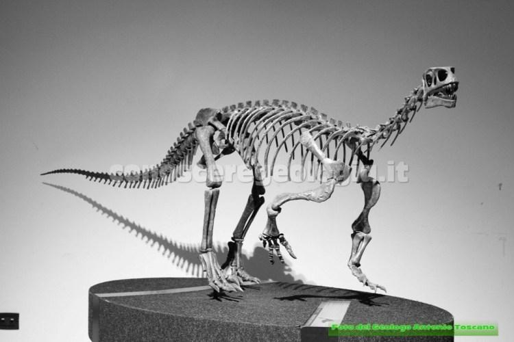 Dinosauro erbivoro
