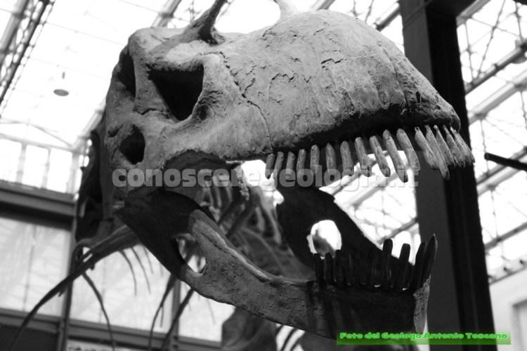 Argentinosaurus huinculensis, particolare del cranio