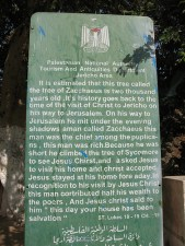Middle East irony: plaque describing Zacchaeus' sycamore tree. Will Lois Lerner pay soe of the price he paid?