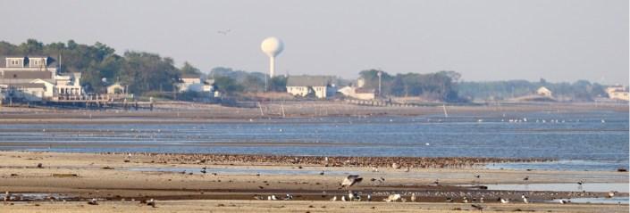 aquaculture and birds
