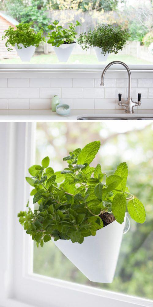 Medium Of Indoor Wall Herb Garden Ideas