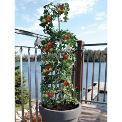 Christmas Vertical Vegetable Garden Ideas Beans To Vertical Vegetable Garden Ideas Beginners Contemporist Vegetable Vertical Gardening Beginners Encourage Your Vine Liketomatoes