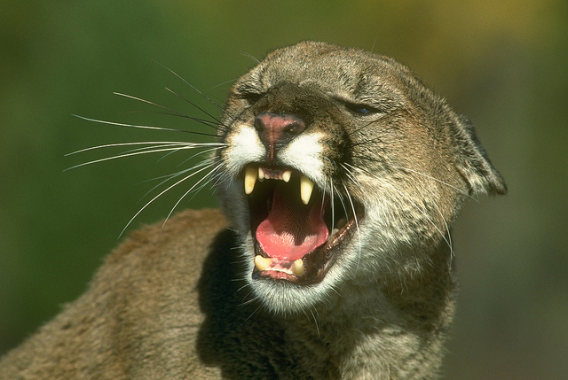 Sleep Mode is Causing OpenGL Problems in Mountain Lion