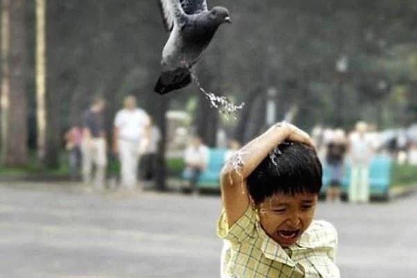 Poop Pigeon Kid Feature