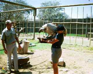 Volunteer hand feed a vulture? You bet!
