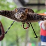 Orvillecopter is a flying dead cat