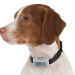 Bark Deterring Ultrasonic Collar ensures Fido remains quiet
