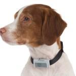 Bark Deterring Ultrasonic Collar ensures Fido remains quiet