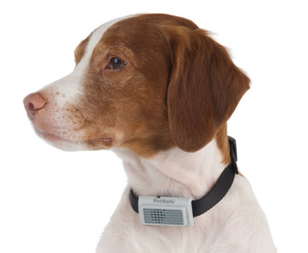 bark-deterring-collar