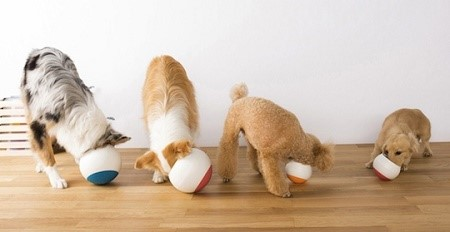 The Oppo food bowl for dogs