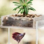 The Vita Fish Tank Planter takes 'living art' to a new level