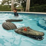Pool Guarding Gator could be a good deterrent