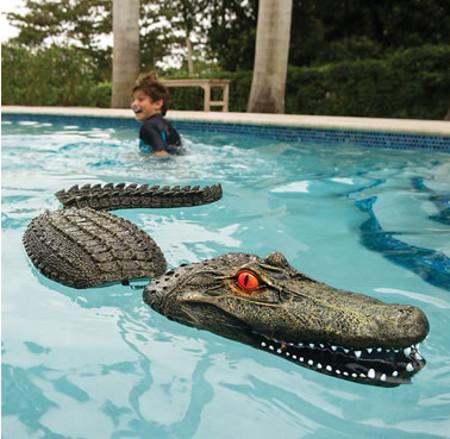 pool-guarding-gator