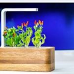 Click & Grow reveals new app for the Smart Herb Garden
