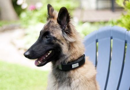 - wagz - Wagz dog collar wearable unveiled » Coolest Gadgets