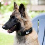 Wagz dog collar wearable unveiled