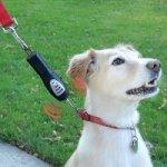 Tug-Preventing Dog Trainer