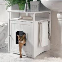 kitty-washroom.jpg