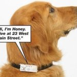 Riddex pet collar talks while keeping fleas away