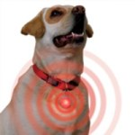 Spotlit LED Collar Light