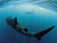 whale-shark-blackbox.jpg