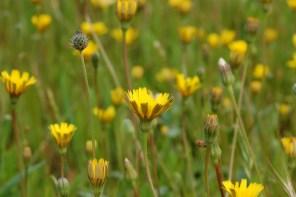 Flora und Fauna: maravilhosa!