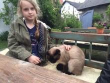 Gäste-Katze zum streicheln