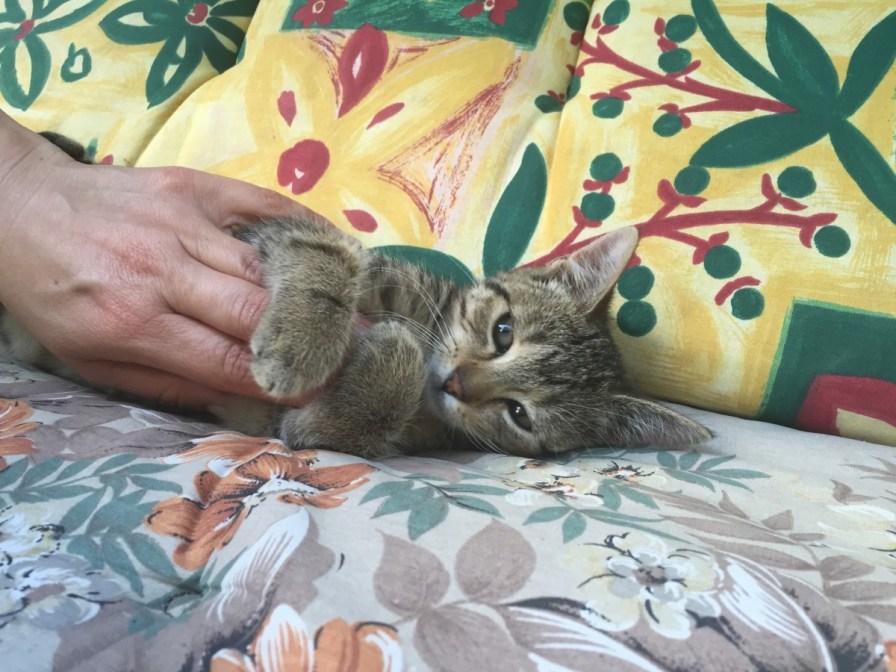 eine von drei kleinen Kätzchen