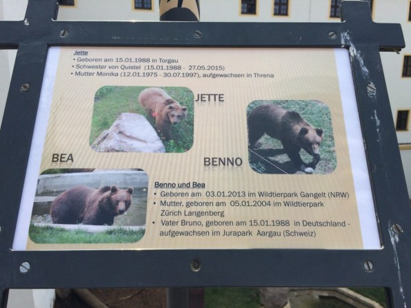 Bären auf Schloß Hartenfels