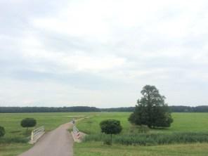 Elbauen nahe Wittenberg