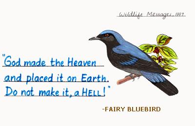 fairybluebird