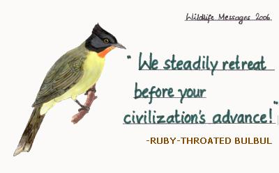 ruby-throated bulbul